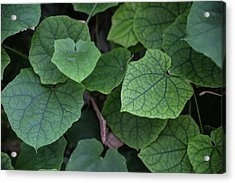 Low Key Green Vines Acrylic Print by Jingjits Photography
