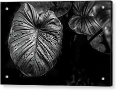 Low Key Nature Background, Textured Plants, Leaves For Decorativ Acrylic Print by Jingjits Photography