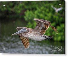 Low Pass Pelican #1 Acrylic Print
