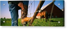 Low Section View Of A Cowboy Adjusting Acrylic Print