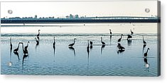 Low Tide Gathering Acrylic Print by Steven Sparks