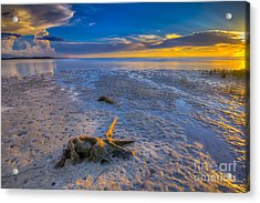 Low Tide Stump Acrylic Print by Marvin Spates