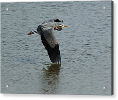 Acrylic Print featuring the photograph Low Wing by Kathleen Stephens
