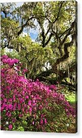 Lowcountry South Carolina Spring Azalea And Live Oak Acrylic Print by Mark VanDyke
