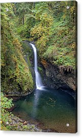 Lower Butte Creek Falls Plunging Into A Pool Acrylic Print by David Gn