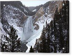 Lower Falls, Yellowstone River Acrylic Print by Mike Buchheit