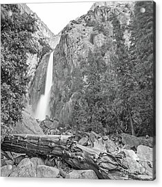 Lower Yosemite Falls In Black And White By Michael Tidwell Acrylic Print
