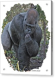 Lowland Silverback Gorilla Acrylic Print by Larry Linton