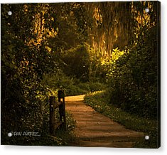 Acrylic Print featuring the photograph Loxahatchee Boardwalk by Don Durfee