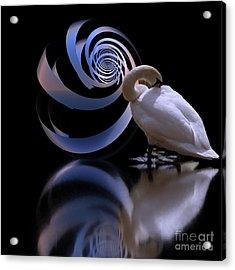 Loxodrome And Swan Acrylic Print