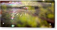 Lp Web Acrylic Print