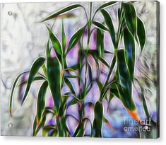 Lucky Bamboo Acrylic Print