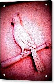 Lucky Bird Acrylic Print by John McGarity