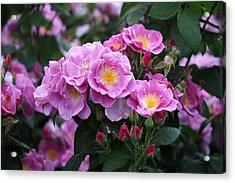 Lucky Floribunda Roses Acrylic Print by Rona Black