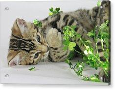 Lucky Kitten Acrylic Print by Shoal Hollingsworth