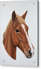 Lucky Acrylic Print by Lucy Deane
