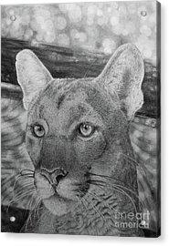 Lucy Acrylic Print by Jennifer Watson
