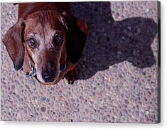 Acrylic Print featuring the photograph Lucy by Lora Lee Chapman