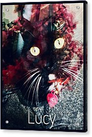Lucy The Cat Acrylic Print