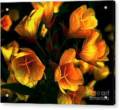 Acrylic Print featuring the photograph Luminous by Elfriede Fulda