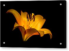 Acrylic Print featuring the photograph Luminous Lilly by Len Romanick