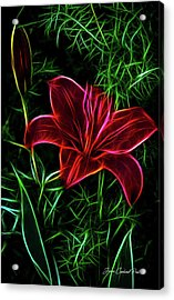 Luminous Lily Acrylic Print by Joann Copeland-Paul