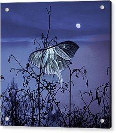 Luna Nights Acrylic Print