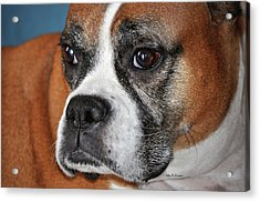 Acrylic Print featuring the photograph Luna The Boxer 01 by John Knapko