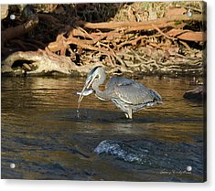 Acrylic Print featuring the photograph Lunch On The Neuse River by George Randy Bass