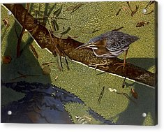 Lunch Time Acrylic Print by Peter Muzyka