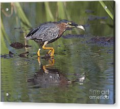 Lunch To Go Acrylic Print by Ruth Jolly