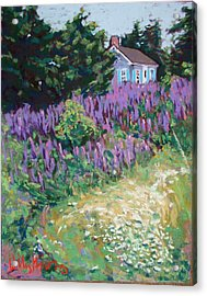 Lupine Cottage In Maine Acrylic Print by Hillary Gross