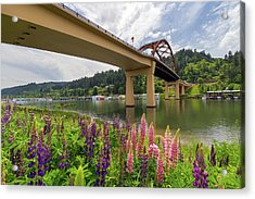 Lupine In Bloom By Sauvie Island Bridge Acrylic Print by David Gn