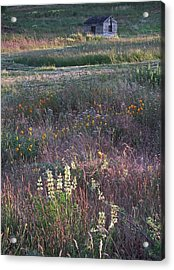 Acrylic Print featuring the photograph Lupine by Laurie Stewart