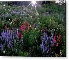Lupines And Sun Acrylic Print