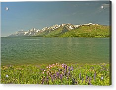 Lupines In The Tetons Acrylic Print