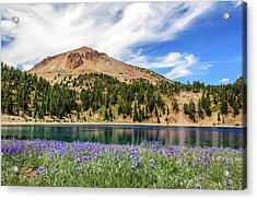 Lupines Lake And Lassen Acrylic Print