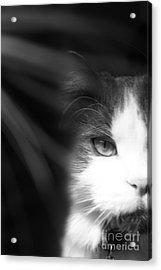 Lurking In The Shadows - Black And White Acrylic Print by Scott D Van Osdol