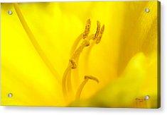 Luscious Yellow Acrylic Print