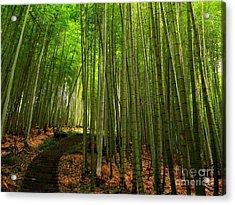 Lush Bamboo Forest Acrylic Print