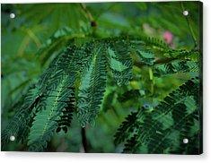 Lush Foliage Acrylic Print
