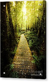 Lush Green Rainforest Walk Acrylic Print