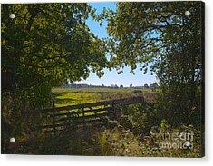Lush Landscape Acrylic Print by Patricia Hofmeester