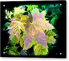 Acrylic Print featuring the mixed media Lush Spring Foliage by Will Borden