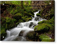 Lush Stream Acrylic Print by Mike Reid