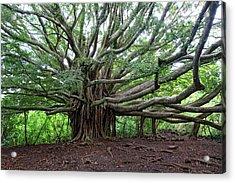 Lush Tropical Banyan Tree Acrylic Print