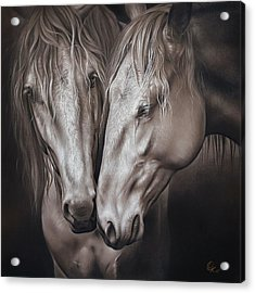 Acrylic Print featuring the drawing Lusitano Pair by Elena Kolotusha