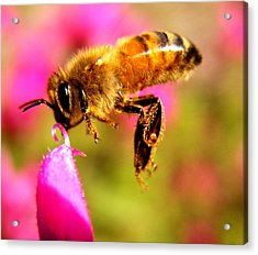 Luv Beeing Kissed Acrylic Print by Trudi Simmonds