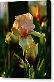 Luxurious Nature 6764 H_2 Acrylic Print