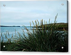 Acrylic Print featuring the photograph Lyme Grass by Marilynne Bull